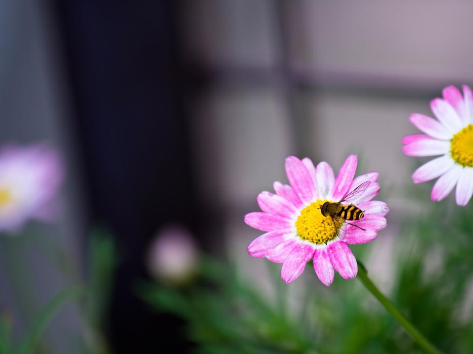 花の蜜を吸う虫の写真