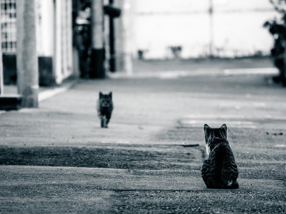 歩み寄る猫の夫婦の写真