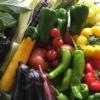 オーガニックな野菜がいっぱいの写真