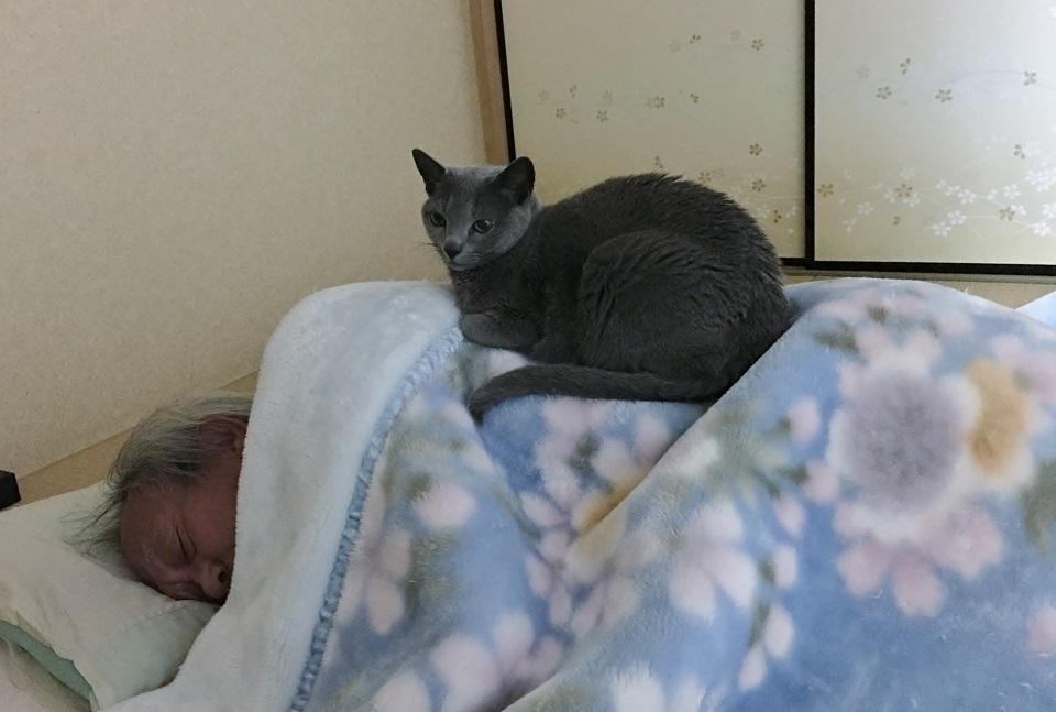猫が横になる夫の上にのっている写真