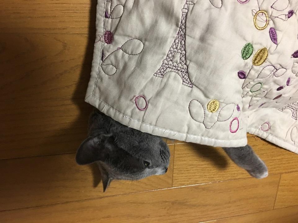 猫がラグにもぐっている写真