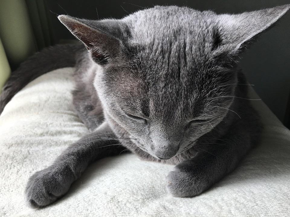 眠そうな猫の写真