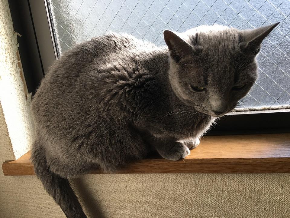 窓辺にいる猫の写真