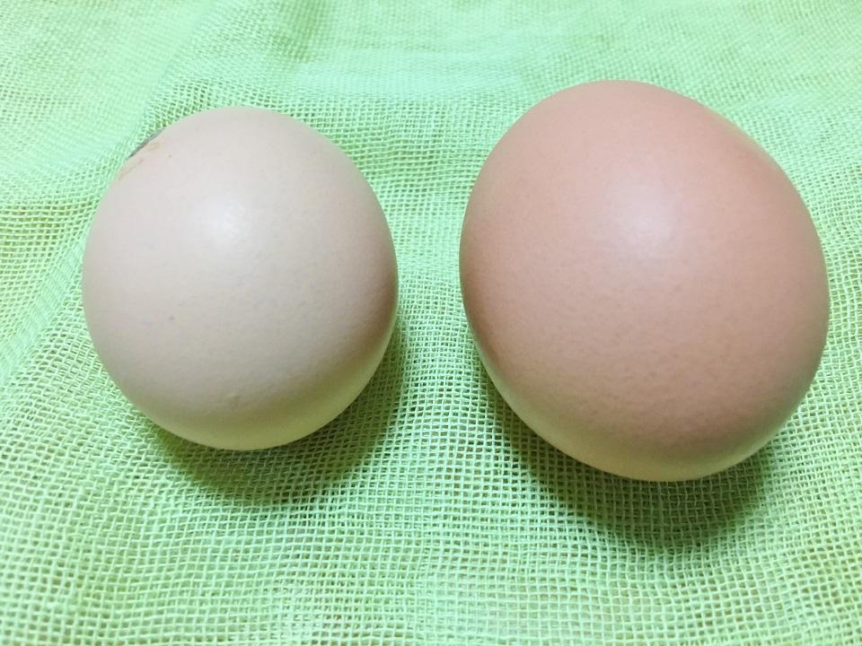 普通の卵との比較の写真