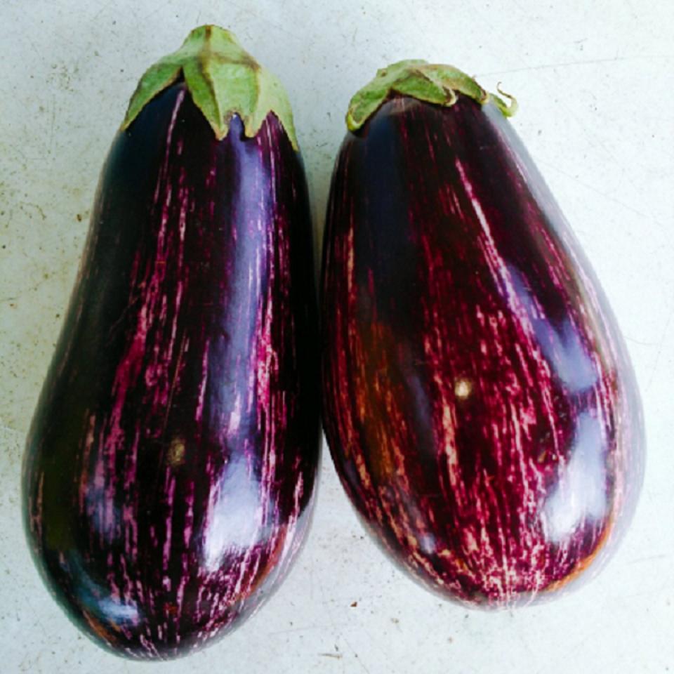 ゼブラなす縞紫の写真