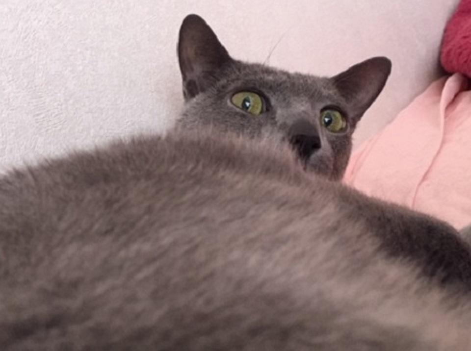 猫が怒っている写真