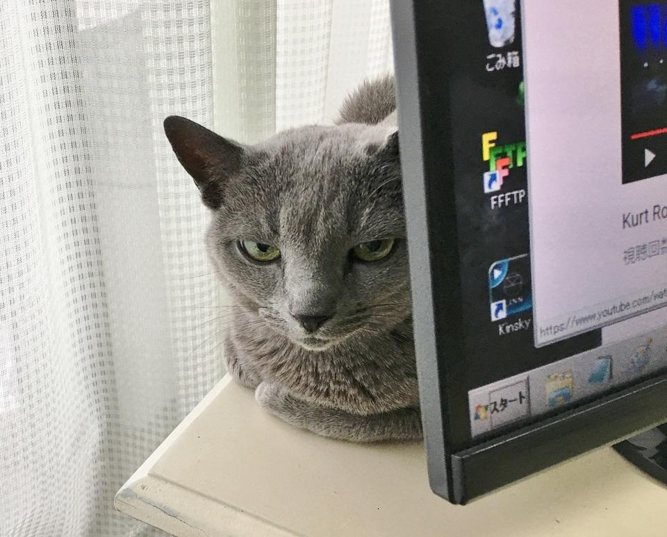 猫がパソコンンの陰からにらんでいる写真