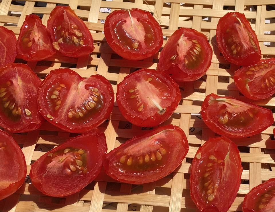 干して5時間後のプチトマトの写真