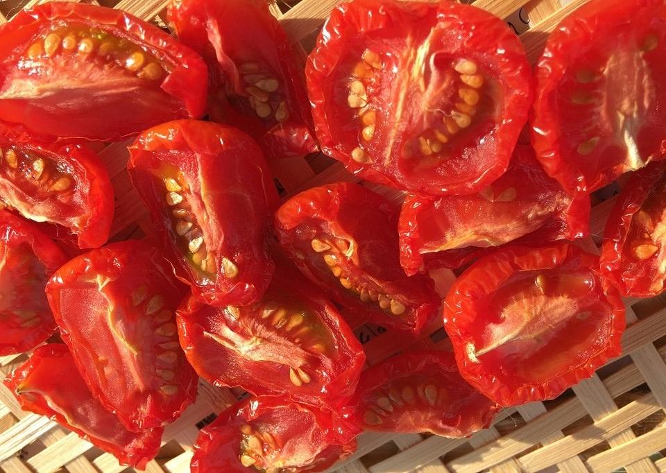 干して9時間後のプチトマトの写真
