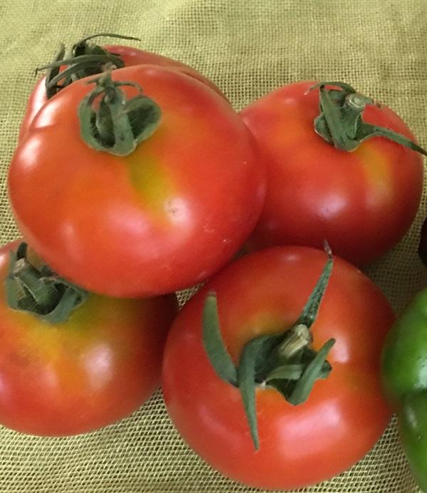 ファーマーズマーケットで買ったトマトの写真