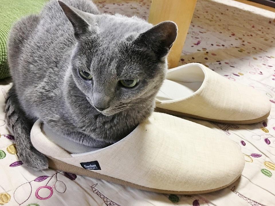 猫がスリッパをはいている写真