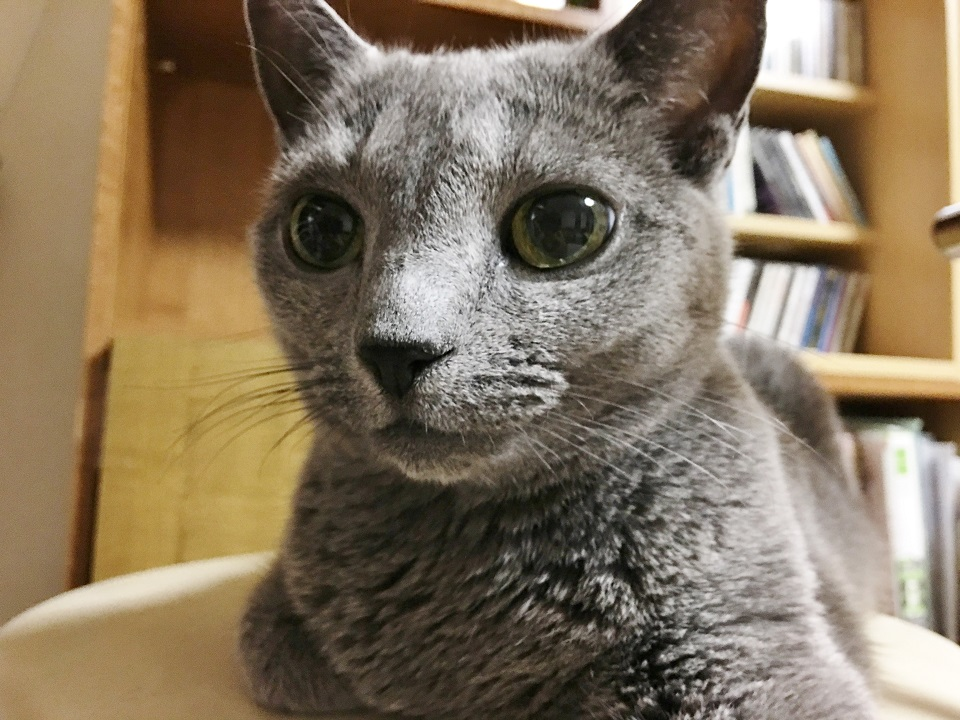 猫の顔の写真