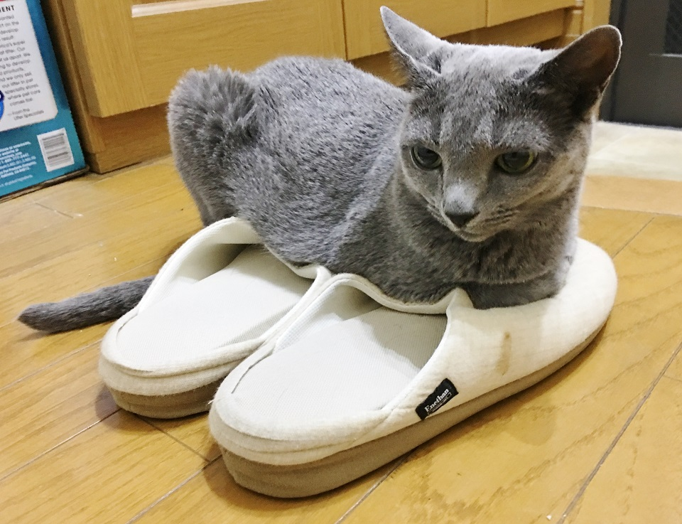 猫がスリッパの上に乗っている写真