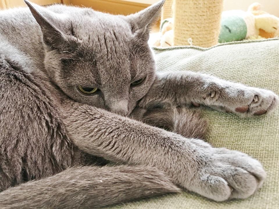 やる気のない猫の写真