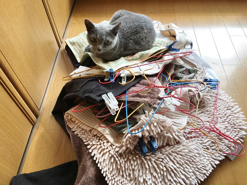 洗濯物の山の上に猫がのっている写真