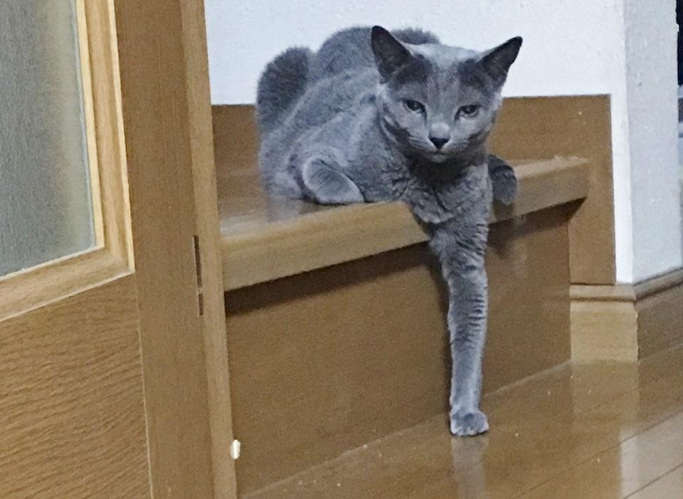 猫が仁義を切っているように見える写真
