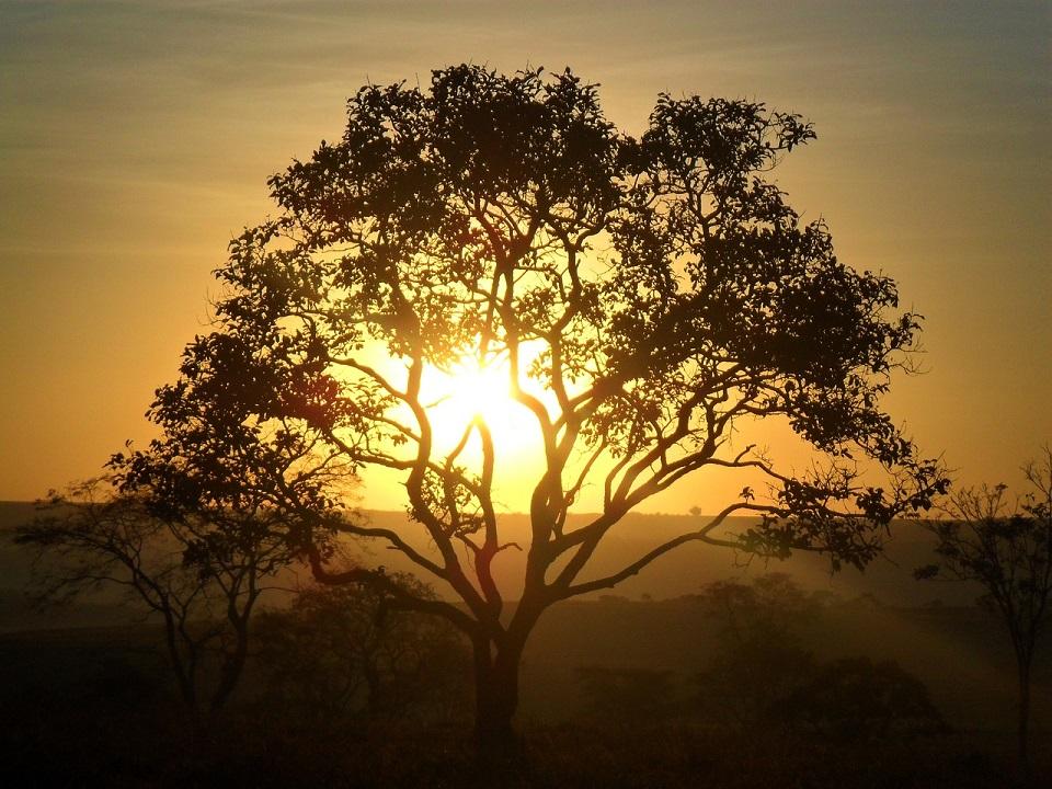 夕日の中の古木の写真