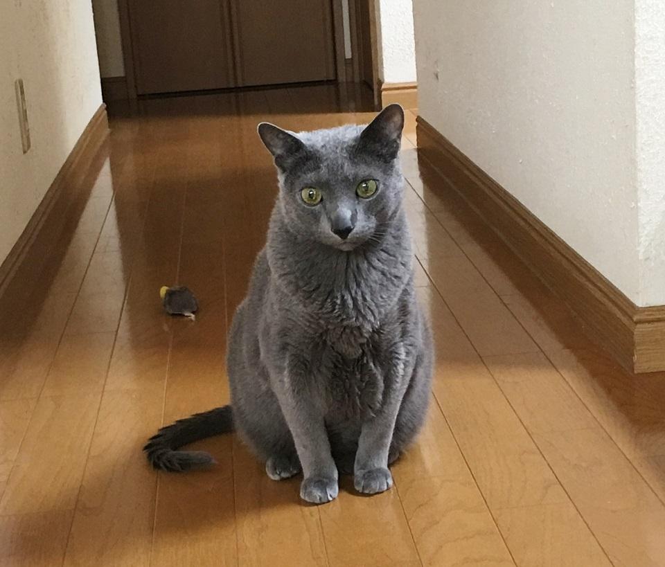 猫が階段の前にいる写真