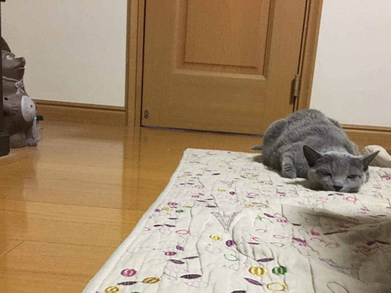 猫が全身を床につけている写真、正面、遠方から