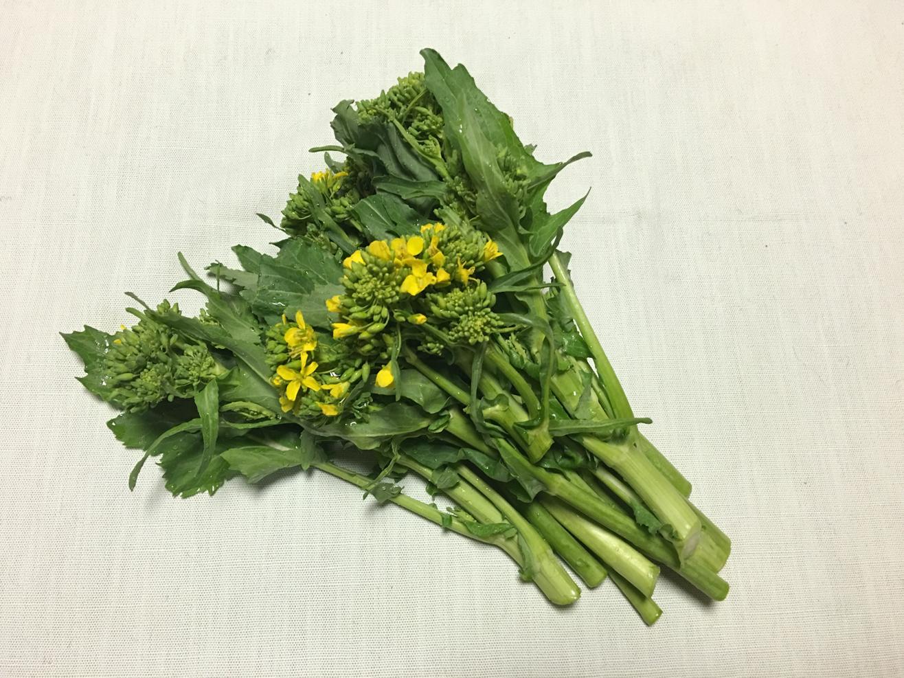 菜花の写真