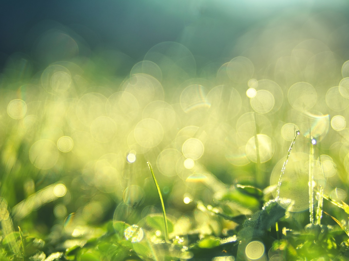 緑に陽の光が輝いている写真