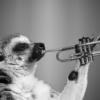 若手ジャズトランペッターならこれを聴け!Roy Hargroveの意思を継ぐ3人|ゴニョ研