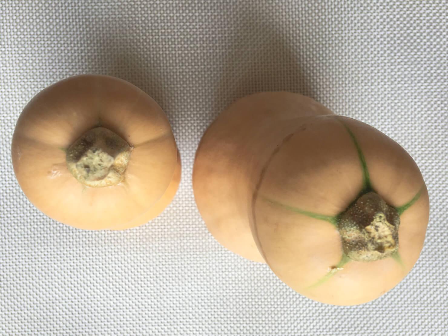 バターナッツかぼちゃの上部の緑色の筋が薄いものと濃いものの写真