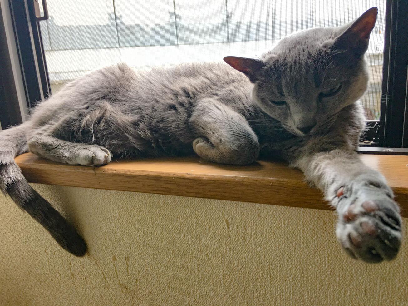 猫が窓辺にいる写真