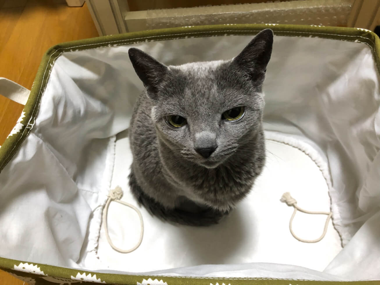 猫が箱に入っている写真1