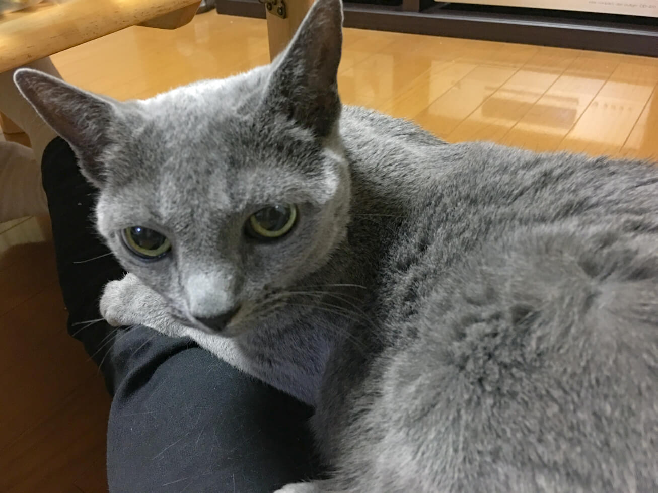 猫が膝の上にいる写真