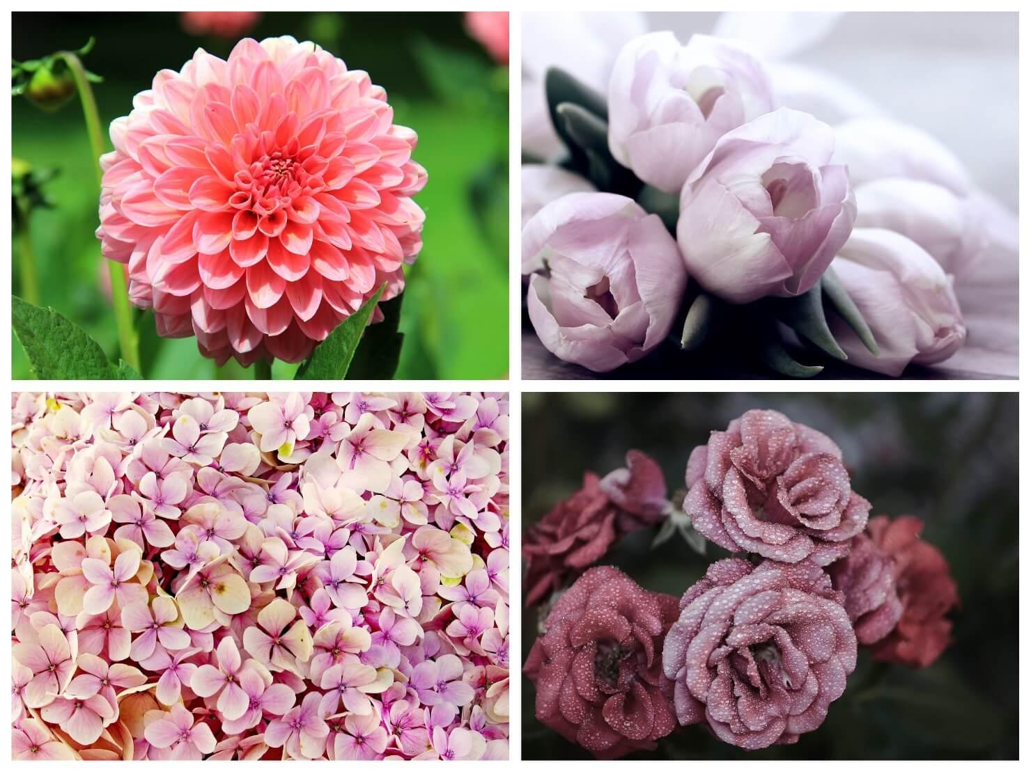 いろいろなピンクの花の写真