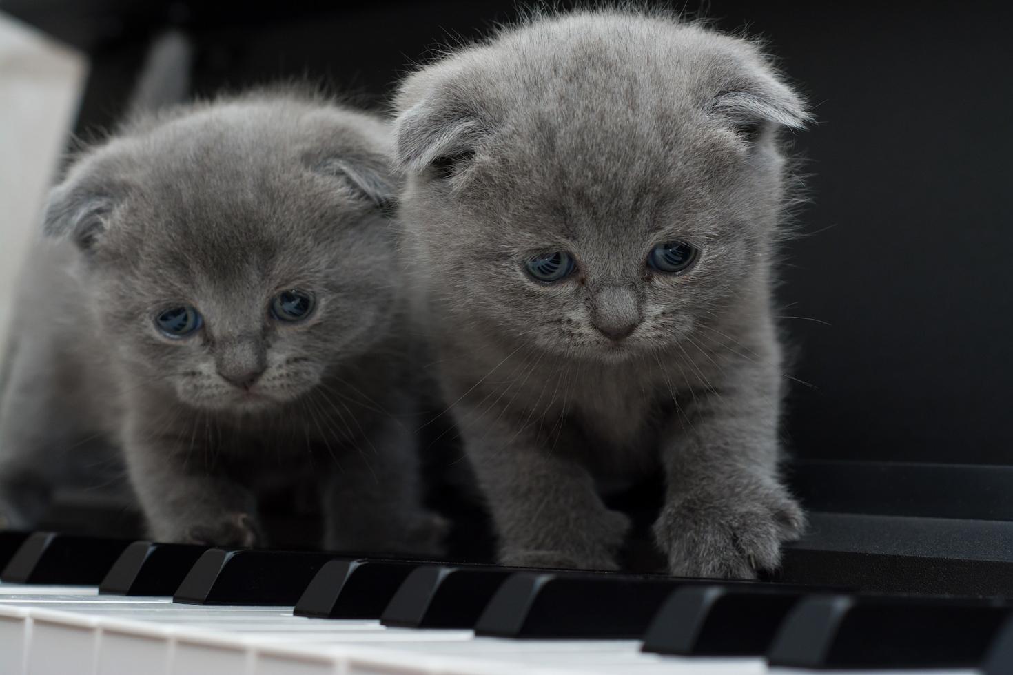 ピアノの鍵盤に猫がいる写真