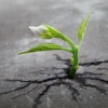 コンクリートから芽を出す雑草の写真