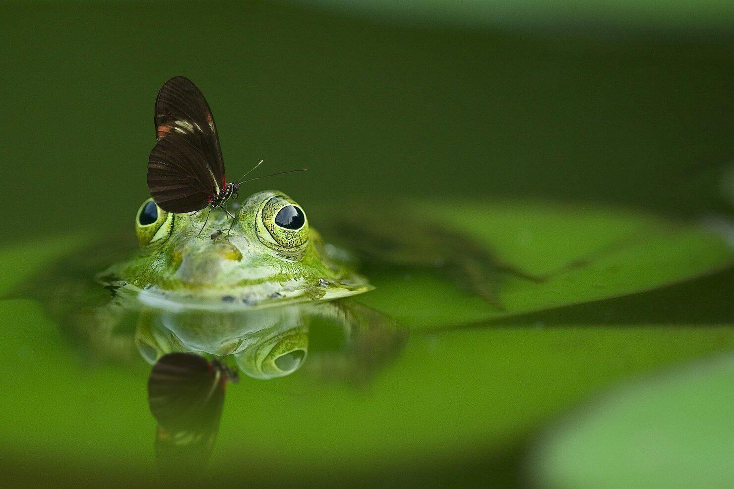 カエルの頭に蝶々がとまっている写真