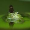 カエルの頭にとまる蝶々の写真