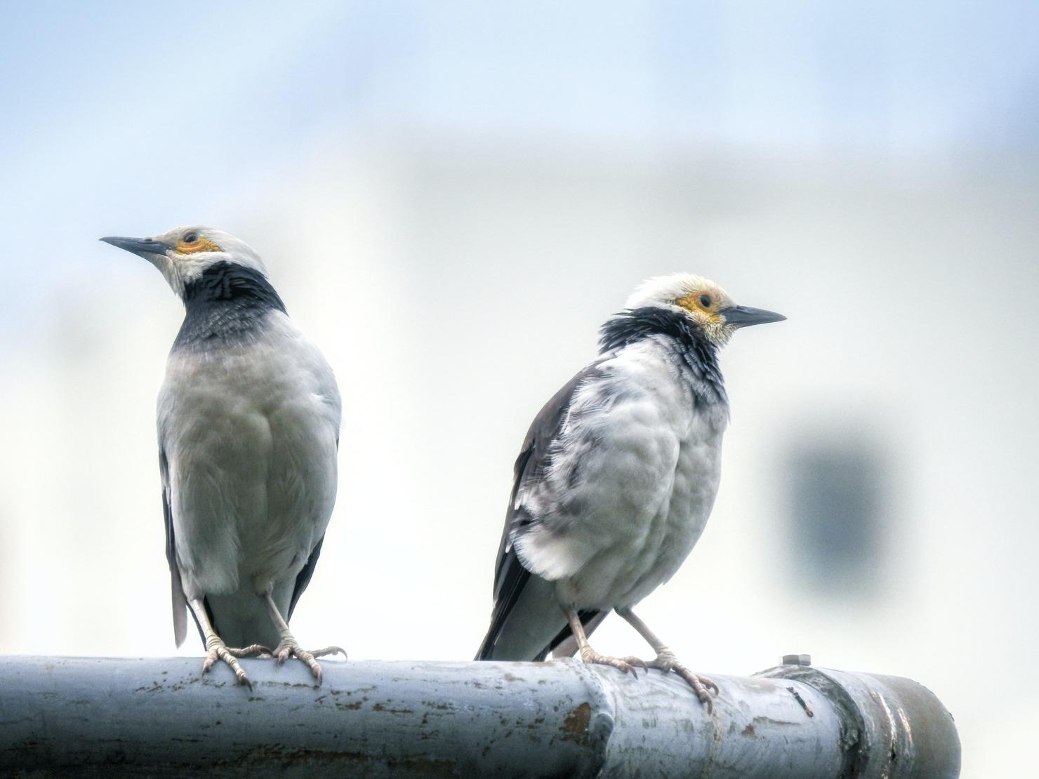 2羽の鳥の写真