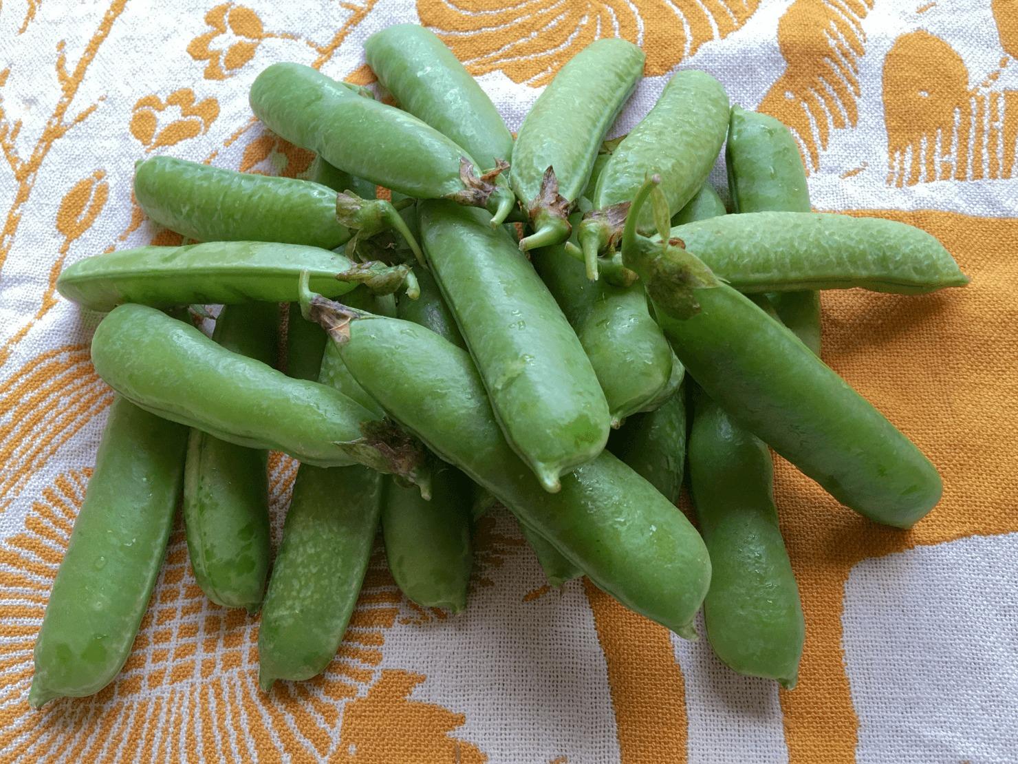グリーンピースの豆の写真