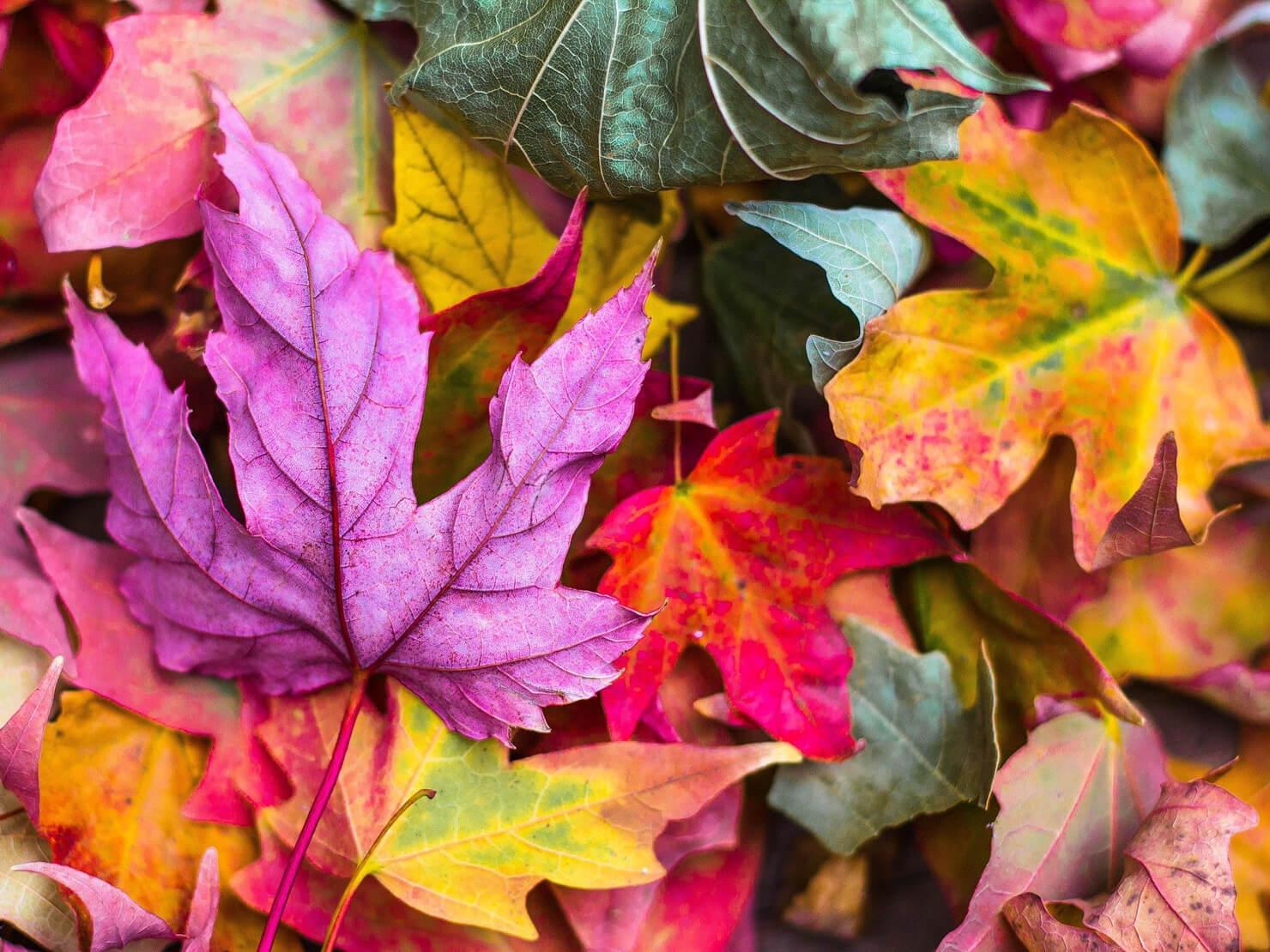 いろいろな色の葉っぱの写真