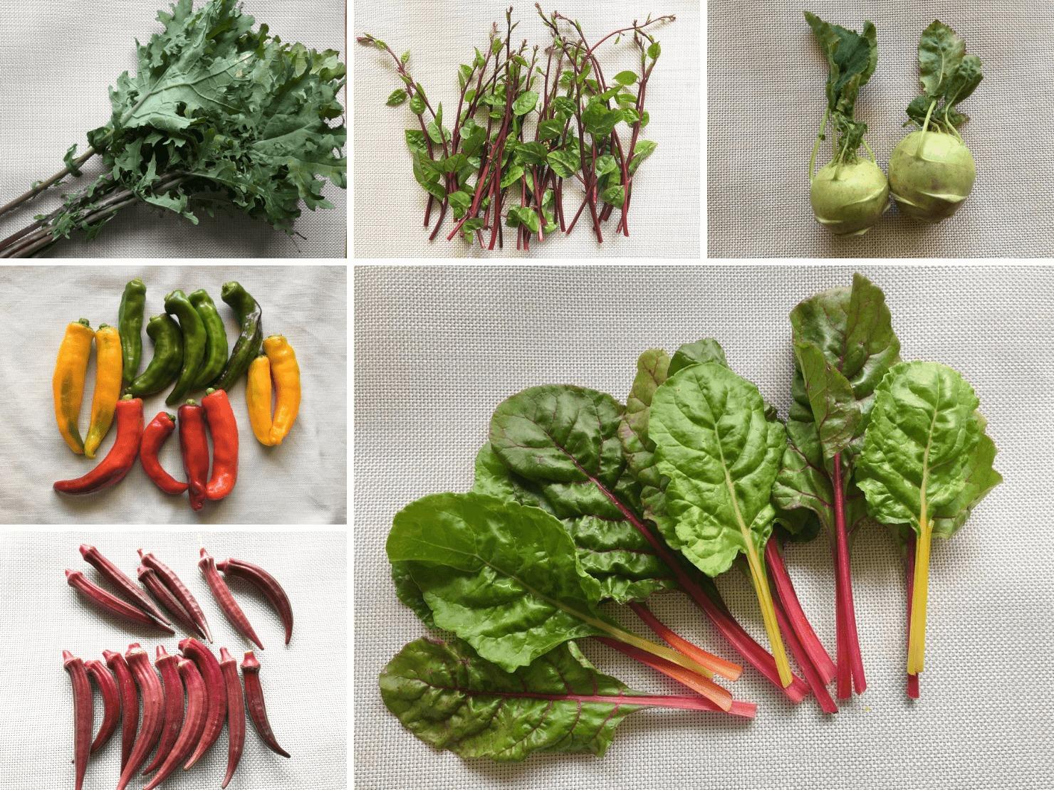 たくさんの珍しい野菜の写真
