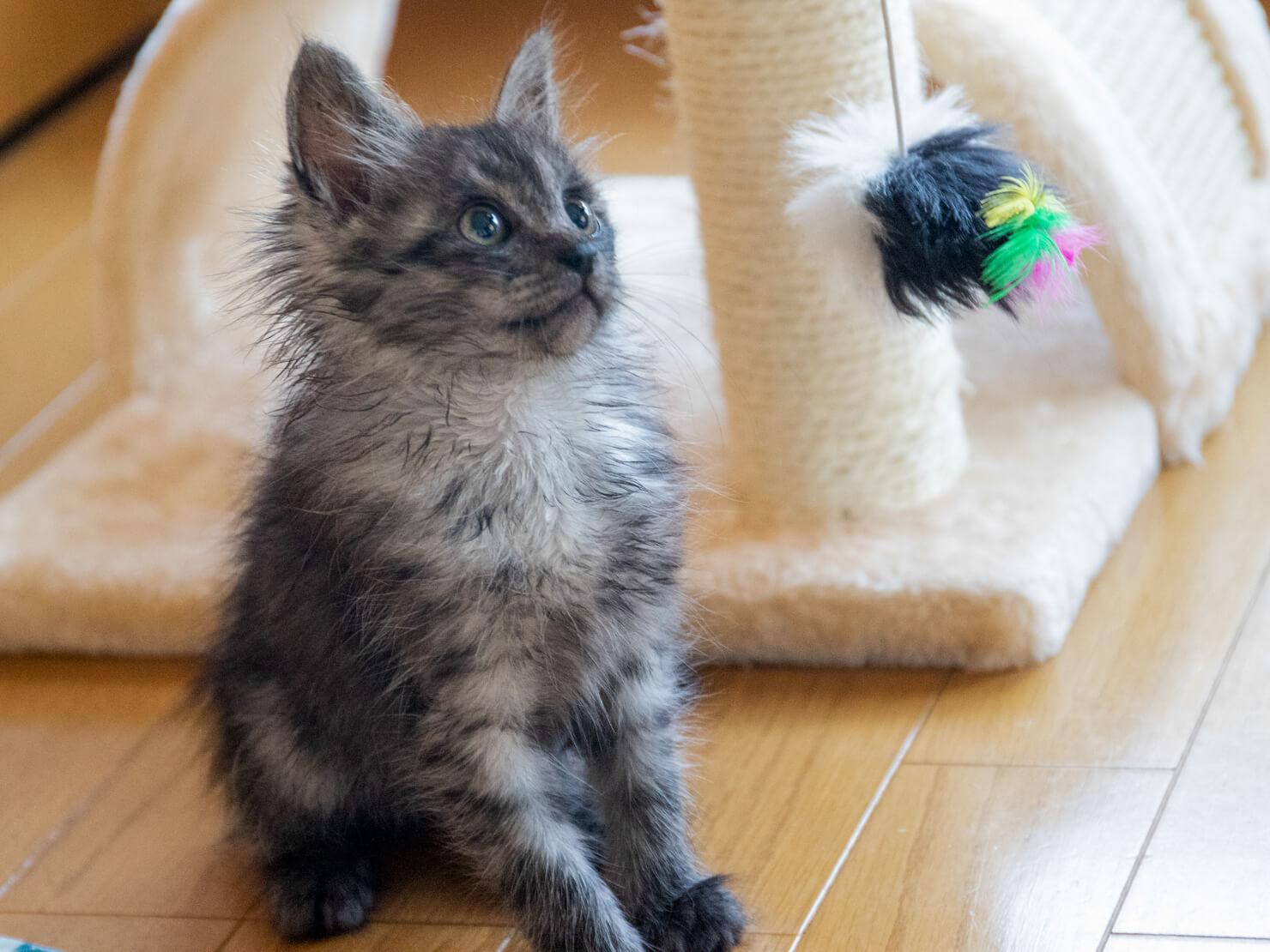 フワフワの小猫の写真
