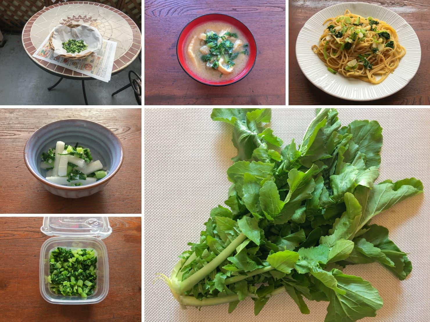 保存した大根葉や大根葉の料理の写真
