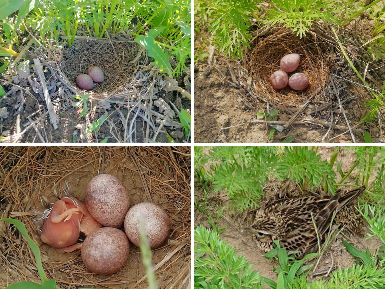 畑の中の鳥の巣の写真