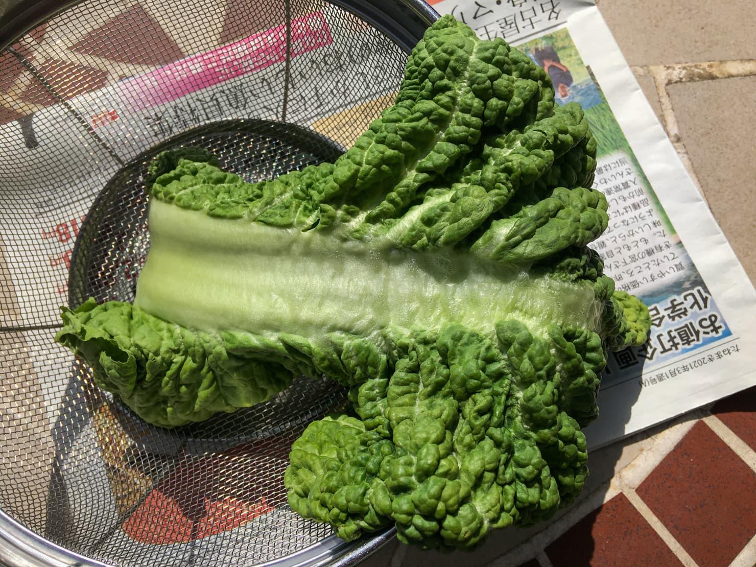 干したかつお菜の写真