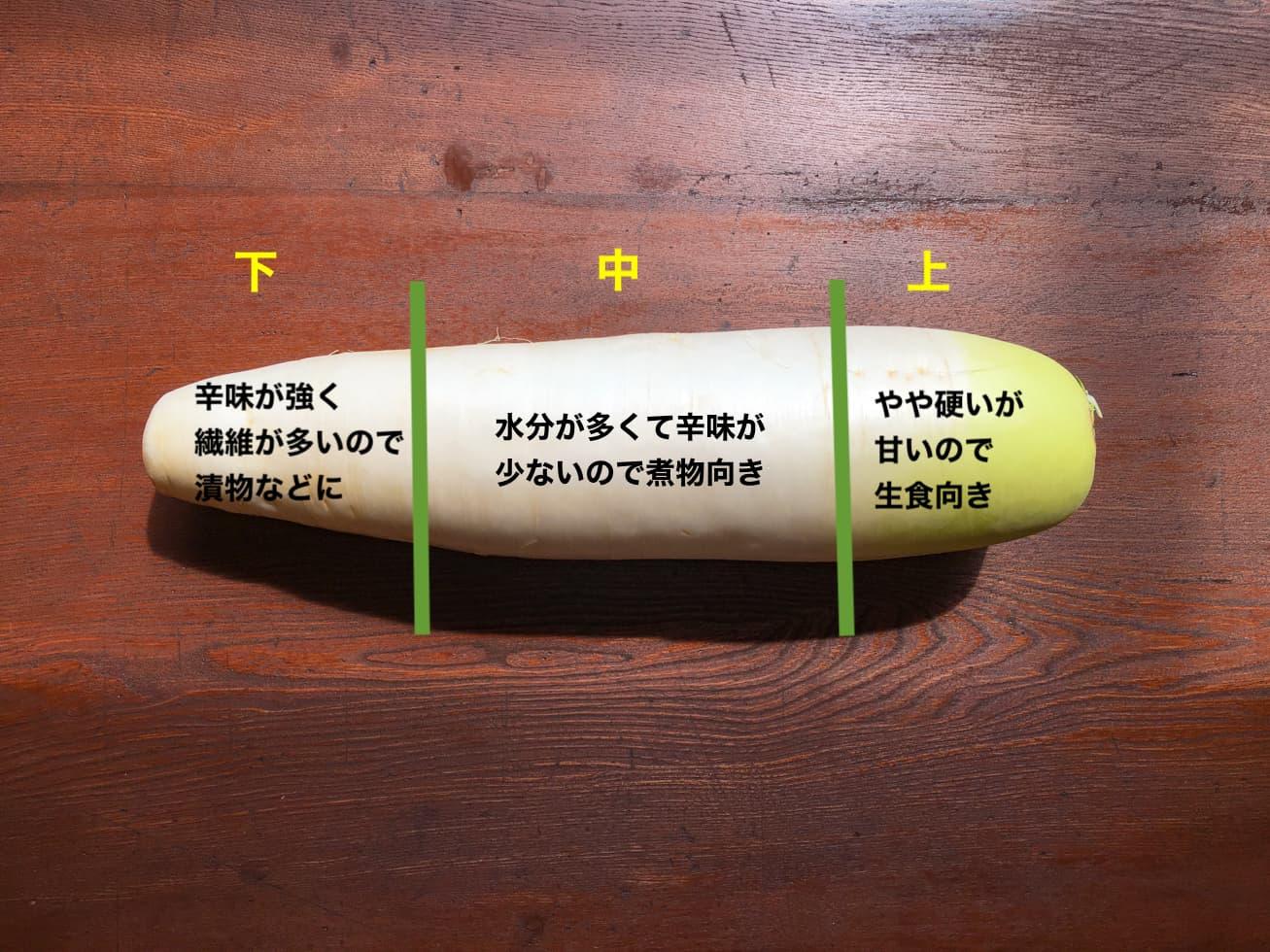 大根の部位による特徴の写真
