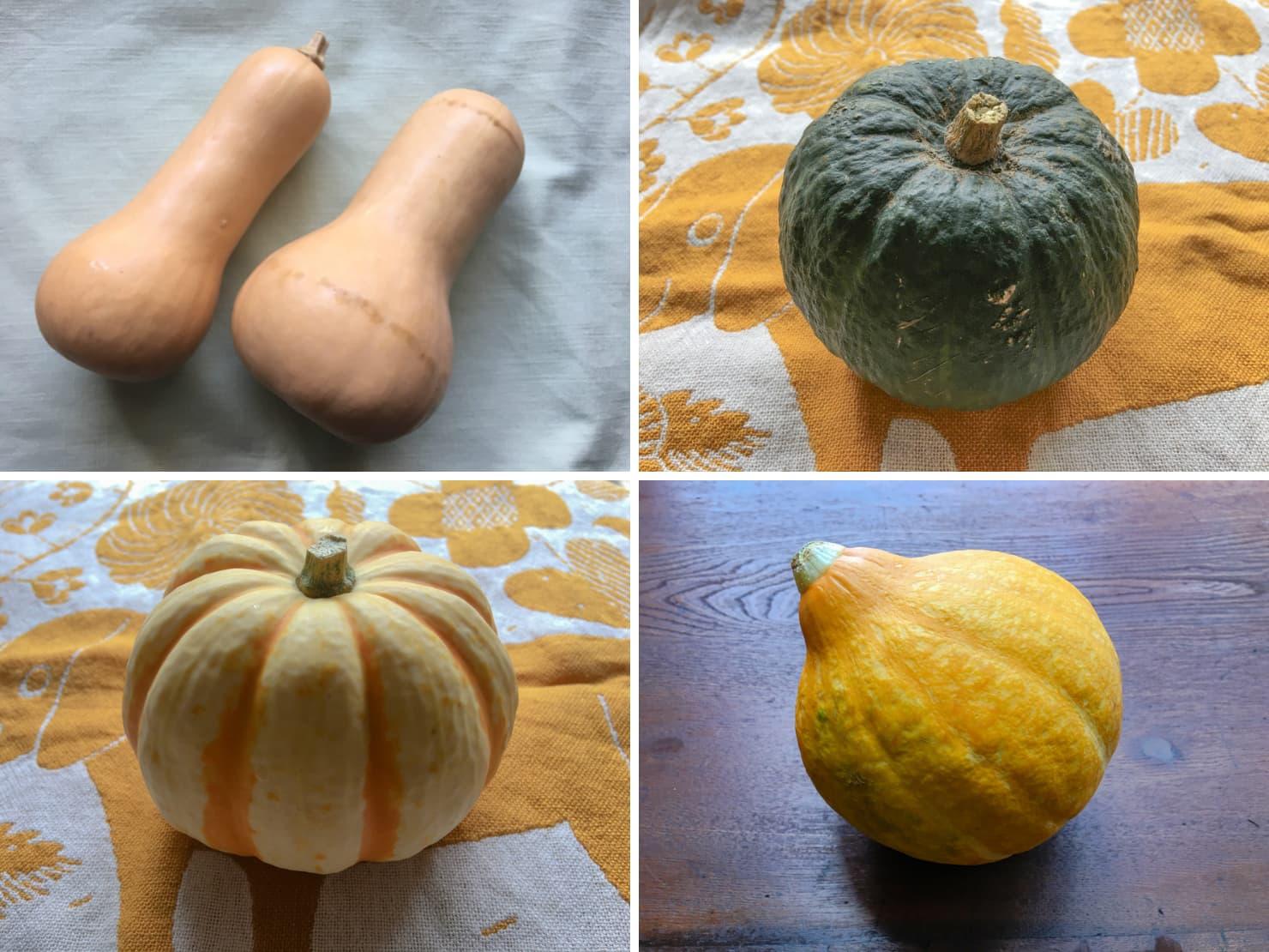 いろいろなかぼちゃの写真