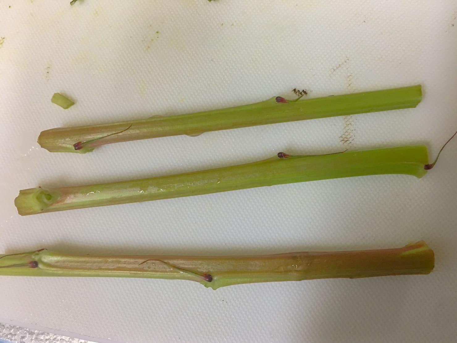 モロヘイヤの茎のかたい部分の写真